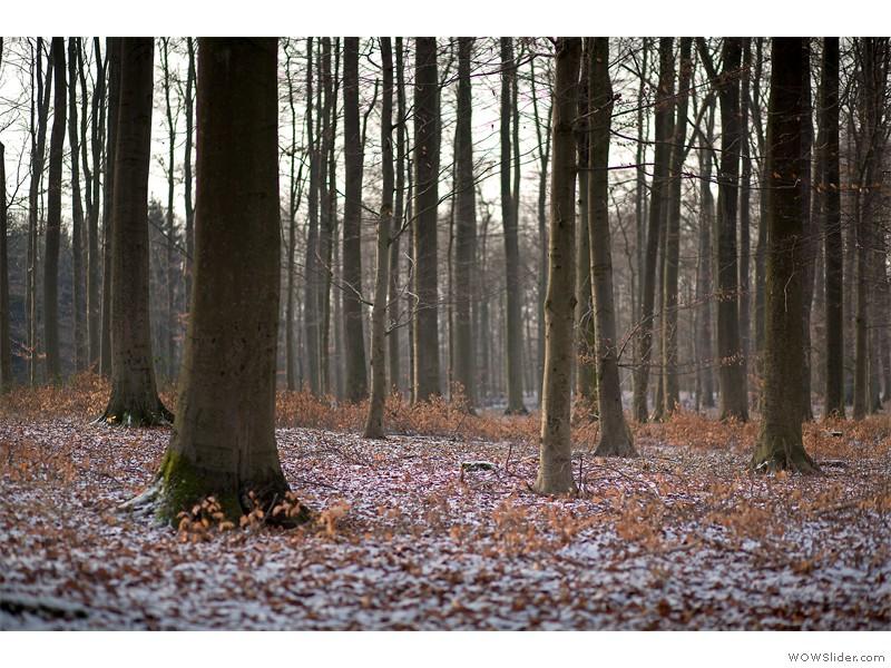 Wald_27
